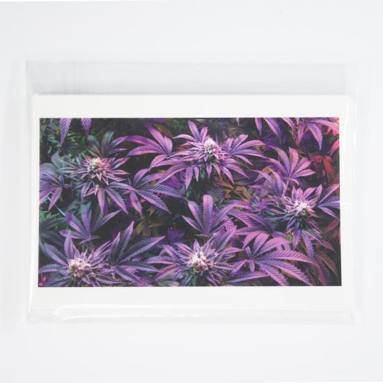 cannabis photo postcards cannabis postcards greeting cards potography flowering canopy 10 pack