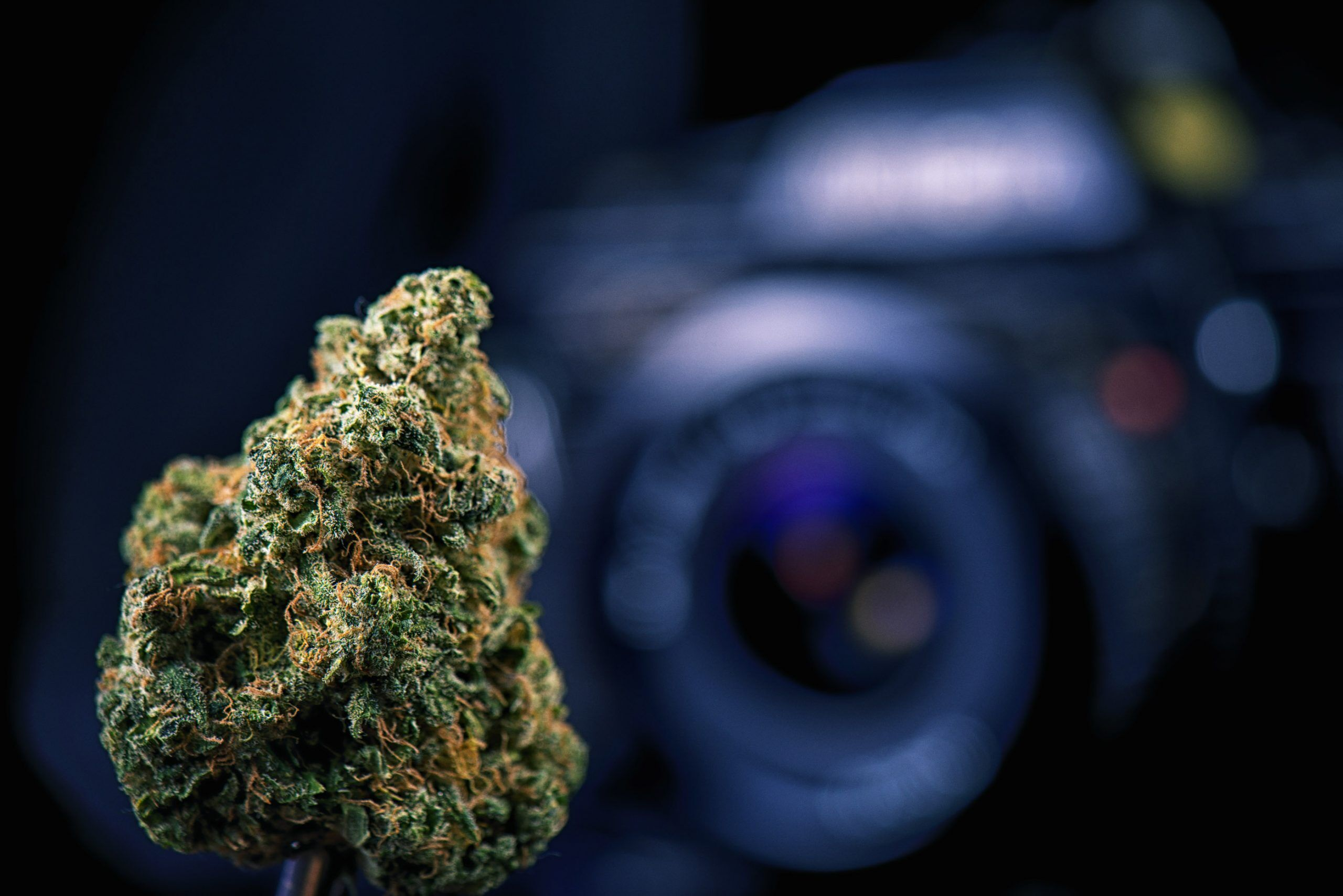 cannabis photography photo contest Dried cannabis bud in front of digital camera lens - marijuana photography concept