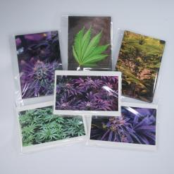 cannabis photo notecards photography potography variety -IMG_5280