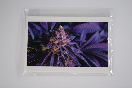cannabis photography potography notecard cannabis bud flower- IMG_5292