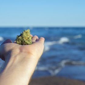 august 2020 photo contest Hand holding a cannabis nug against ocean waves and blue sky landscape - medical marijuana concept