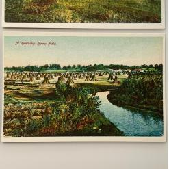 Vintage postcards - Historic hemp postcard 8 a-kentucky-hemp-field-2-product-image