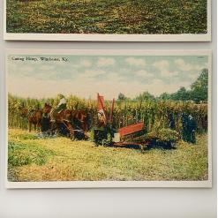 classic postcards - historic hemp postcard 4 cutting-hemp-winchester-ky-product-image