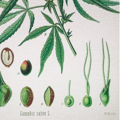 muller botanical hemp print closeup