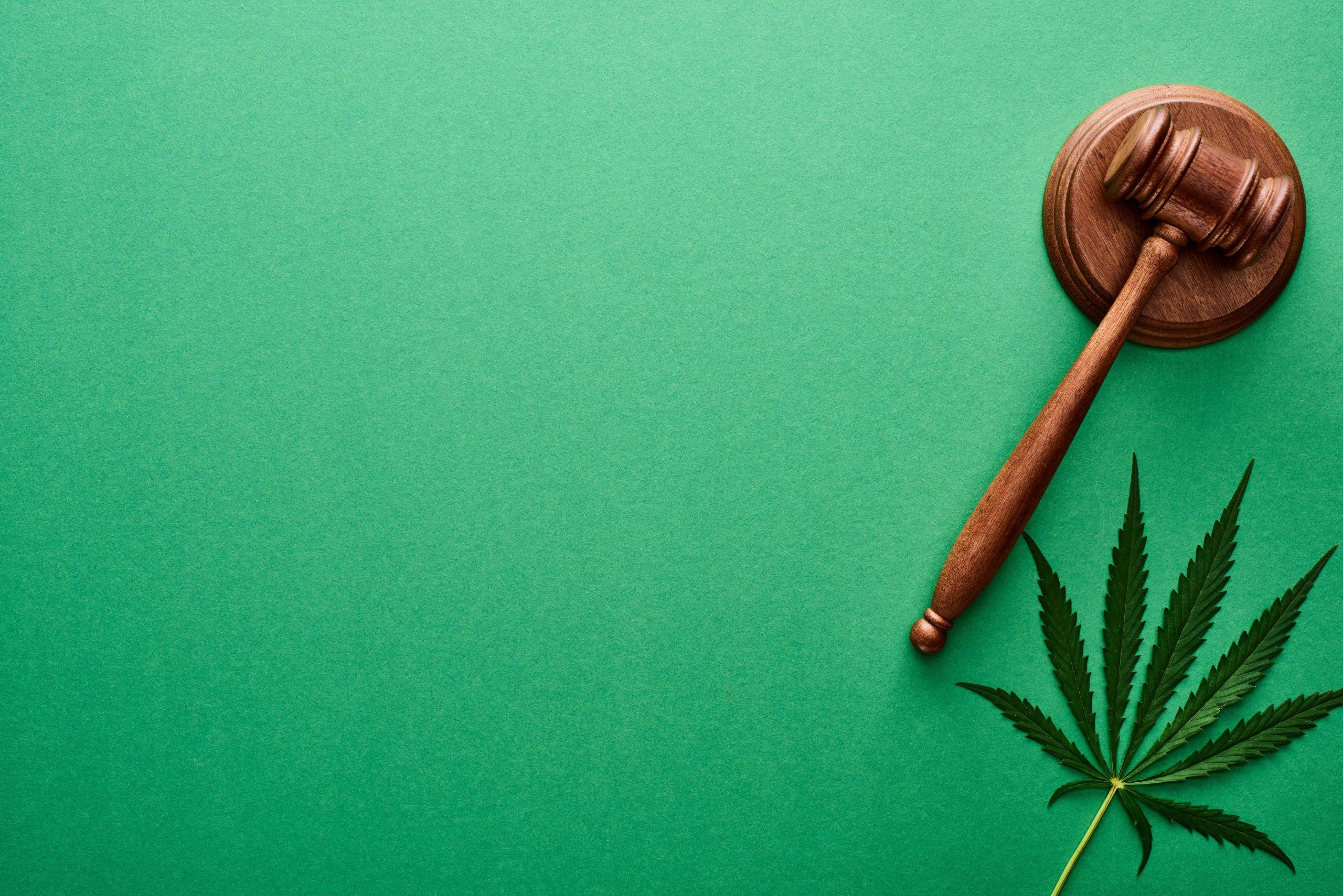 cannabis-court-laws-judge-disclaimer-page-image