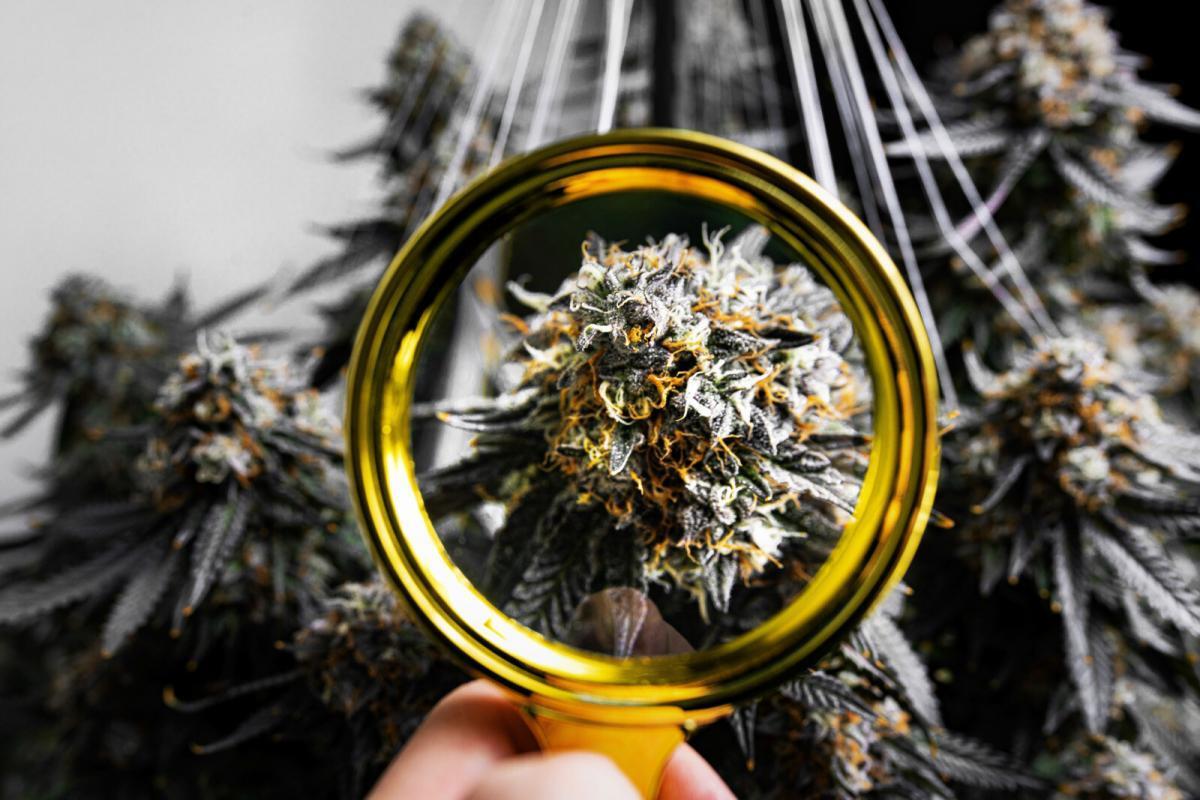 mai tai x magnifying glass