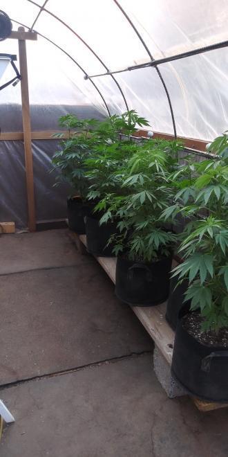 First legal grow