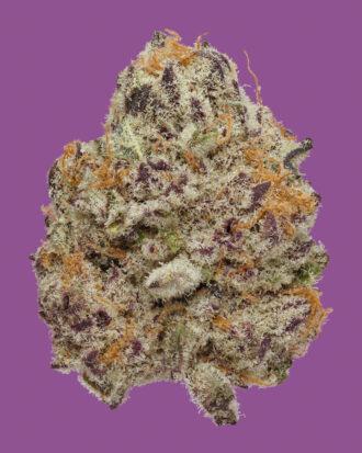 Purple Punch nug