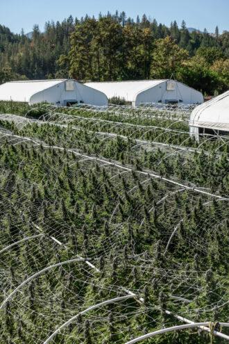 decible farms